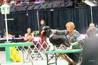 Dogshow 2017-04-08 KC of Yorkville--174321