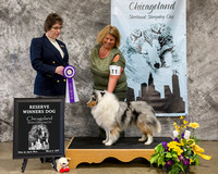 Dogshow 2018-03-03 CSSC Day 1--145600