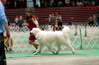 Dogshow 2017-04-08 KC of Yorkville--133138-3
