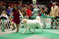 Dogshow 2017-04-08 KC of Yorkville--133248-4