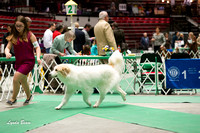 Dogshow 2017-04-08 KC of Yorkville--133352-2
