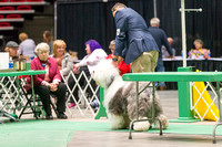 Dogshow 2017-04-08 KC of Yorkville--174110