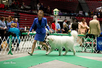 Dogshow 2017-04-08 KC of Yorkville--132619-5