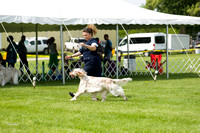 Dogshow 2017-06-04 untitled shoot--102057