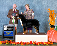 Dogshow 2017-10-28 BMDCNI Win Photos--103240