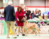 Dogshow 2017-12-09 Skokie Valley KC--090538