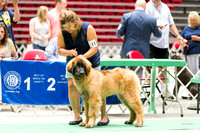 Dogshow 2017-07-08 Greater DeKalb KC--133848