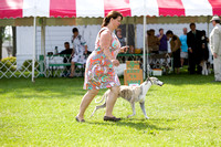 Dogshow 2017-08-01 Burlington WI KC D2--153910-4