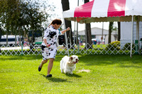 Dogshow 2017-08-01 Burlington WI KC D2--153915