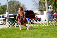 Dogshow 2017-08-01 Burlington WI KC D2--100523-2