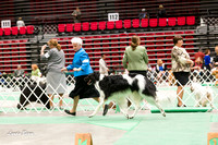 Dogshow 2017-04-08 KC of Yorkville--145102-2