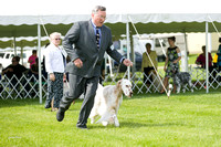 Dogshow 2017-06-04 untitled shoot--101952