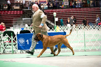 Dogshow 2017-04-08 KC of Yorkville--123304-2