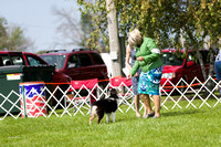 Dogshow 2017-08-01 Burlington WI KC D2--101020