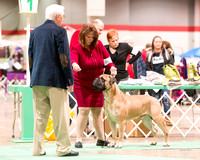 Dogshow 2017-12-09 Skokie Valley KC--090540