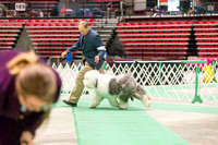 Dogshow 2017-04-08 KC of Yorkville--174210-2