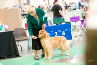 20170616 Golden Retriever Club of Illinois (some of the Bitch Classes only)