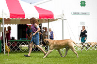 Dogshow 2017-07-31 Burlington WI KC--121545-5