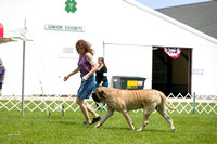 Dogshow 2017-07-31 Burlington WI KC--121544-4