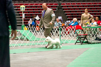 Dogshow 2017-04-08 KC of Yorkville--162353