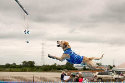 Dogshow 2016-06-16 Grayslake--165146-3