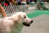Dogshow 2017-04-08 KC of Yorkville--133033
