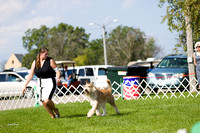 Dogshow 2017-08-01 Burlington WI KC D2--092613