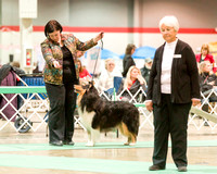 Dogshow 2017-12-09 Skokie Valley KC--165259