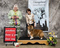 Dogshow 2018-03-04 CSSC Day 2--141451-2