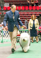 Dogshow 2017-04-08 KC of Yorkville--174145-2