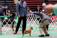 Dogshow 2017-04-08 KC of Yorkville--152652