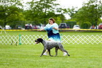 Dogshow 2017-06-04 untitled shoot--131636-2
