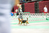 Dogshow 2017-07-08 Greater DeKalb KC--160841