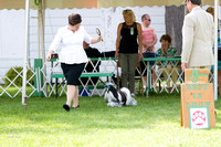 Dogshow 2017-08-01 Burlington WI KC D2--153937