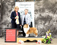 Dogshow 2017-03-05 Sheltie Win Photos--104237