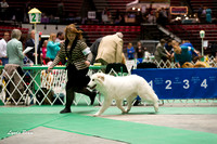 Dogshow 2017-04-08 KC of Yorkville--133021-4