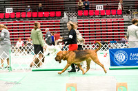 Dogshow 2017-04-08 KC of Yorkville--145152
