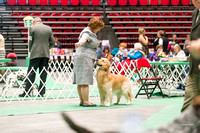 Dogshow 2017-04-08 KC of Yorkville--153818