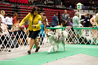 Dogshow 2017-04-08 KC of Yorkville--131634-4