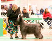 Dogshow 2017-12-09 Skokie Valley KC--165444