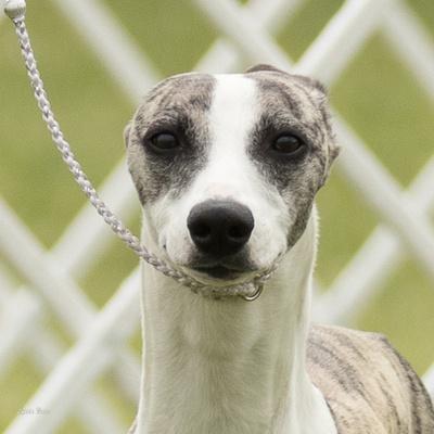 Dogshow 2016-06-04 Woodstock--094350