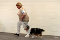 Dogshow 2018-03-04 CSSC Day 2 Candids--134716-2