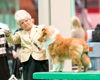 Dogshow 2017-12-09 Skokie Valley KC--153108
