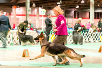 Dogshow 2017-12-09 Skokie Valley KC--165022-5