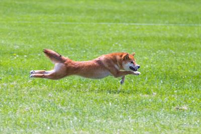 Dogshow 2016-06-11 Oak Creek CAT--115720-9