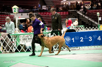 Dogshow 2017-04-08 KC of Yorkville--123103-2