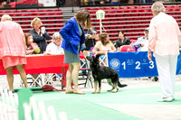 Dogshow 2017-07-08 Greater DeKalb KC--140549