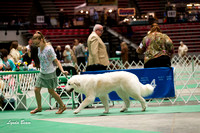 Dogshow 2017-04-08 KC of Yorkville--133502