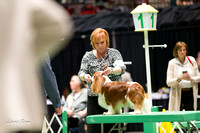 Dogshow 2017-04-08 KC of Yorkville--151543