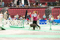 Dogshow 2017-07-08 Greater DeKalb KC--140938-2